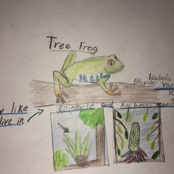 Tree Frog by Isabela Blevins Vargas, Age: 10; Golfito, Costa Rica