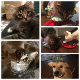 adoption anniversary party for pets at pvpe