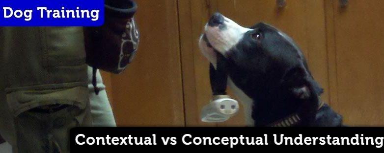 Contextual vs Conceptual Understanding in Dog Training