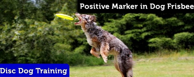 The Importance of Using a Positive Marker in Dog Frisbee
