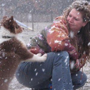 Aussie Puppy Giving Attention
