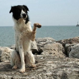 Dog Waving on Beach