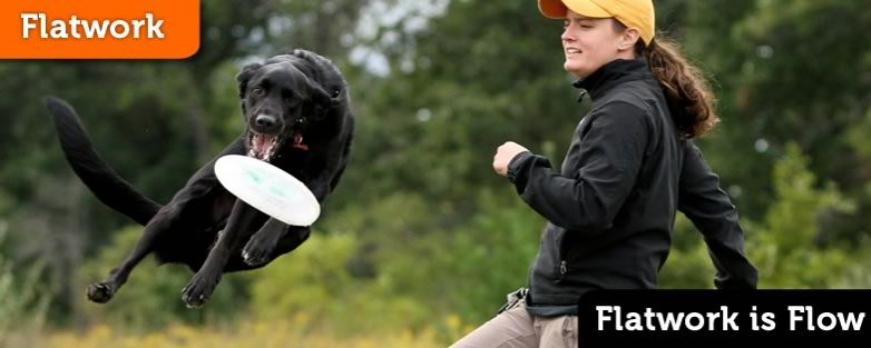 Flatwork is Flow – Introducing Disc Dog Flatwork