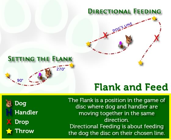 Disc Dog Flanking and Feeding