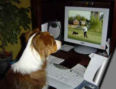 online dog training classes