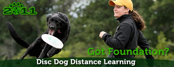 Online Frisbee Dog Classes with Pawsitive Vybe