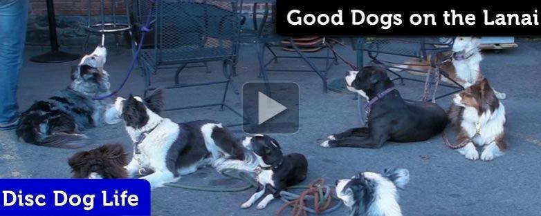 Good Dogs on the Lanai