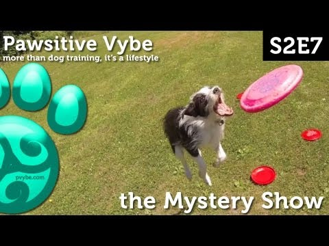 Pawsitive Vybe S2E7 - The Mystery Show   Pawsitive Vybe