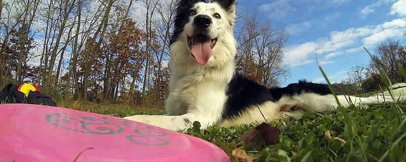 Tao of Disc Dog   On Balance