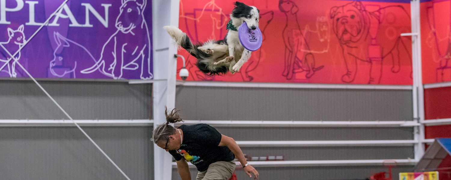 Tao of Disc Dog | On Separation