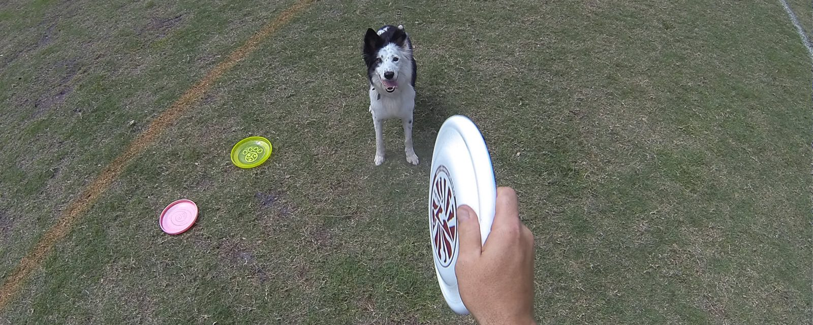Tao of Disc Dog | Balance For the Dog