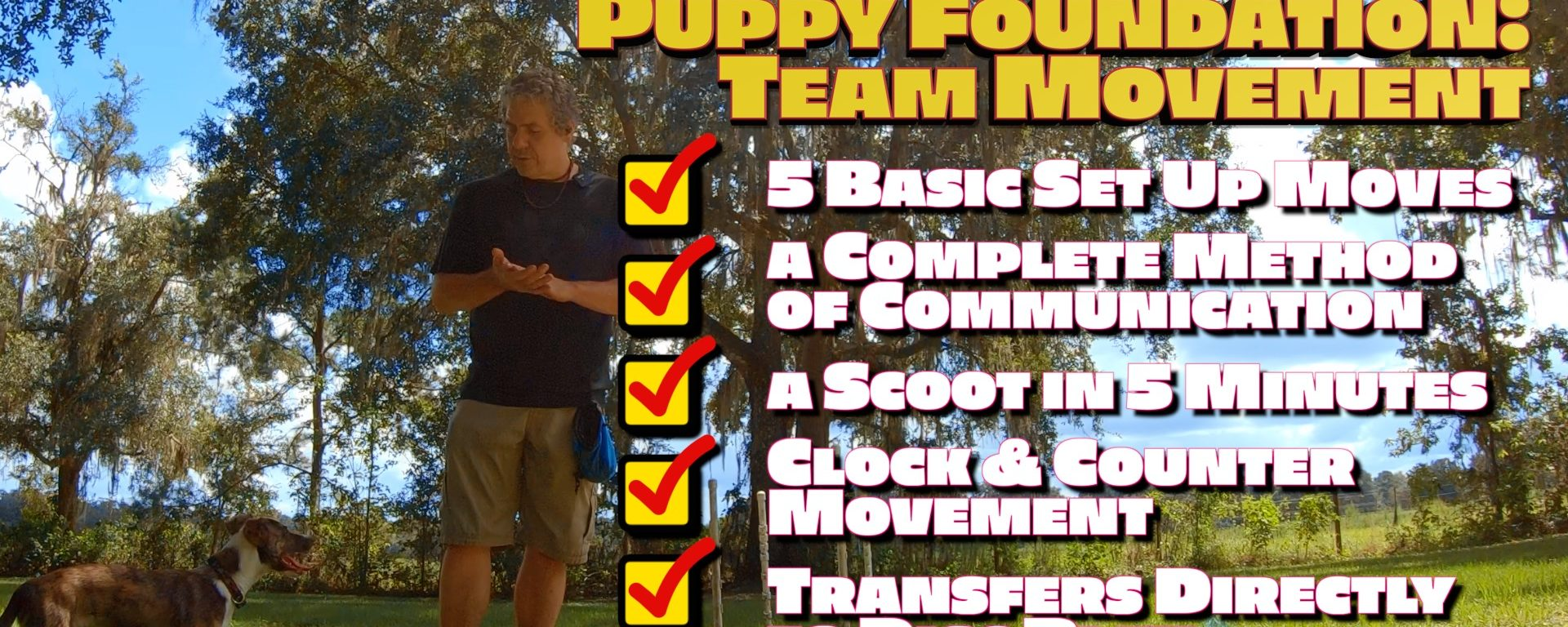 Everything Your Puppy Needs to Know About Team Movement in 5 Minutes