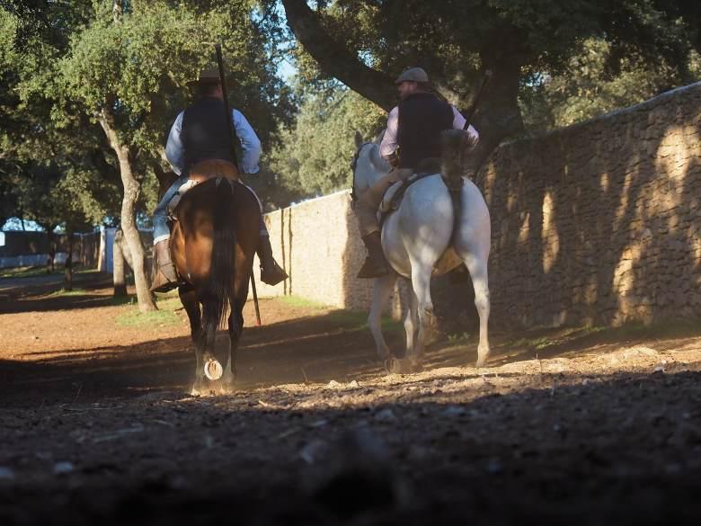 Nwet końskie zady potrafią wyglądać ok. M.Zuiko 12-100mm f/4.0