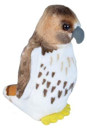 Audubon Red-tailed Hawk