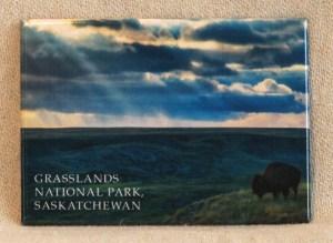Robert Postma Magnet Bison in Grasslands National Park