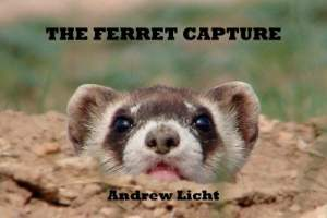 The Ferret Capture by Andrew Licht