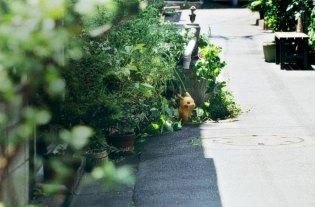 Un Pikachu sauvage apparait