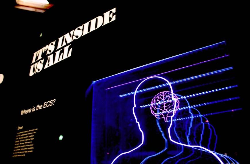 Neuroestetica computazionale: la nuova frontiera del digital marketing