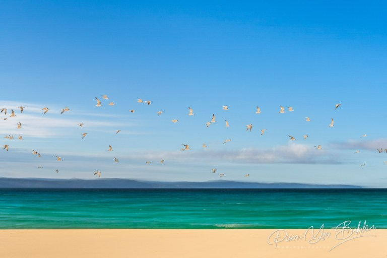 Flight of seabirds