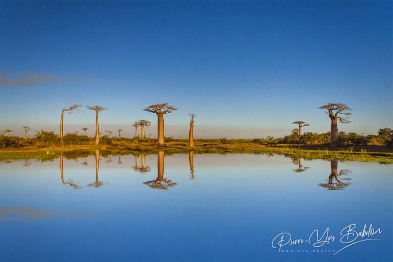 Les baobabs de Morondava, Madagascar