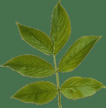 LLW_ShowersOfFlowers_Foliage