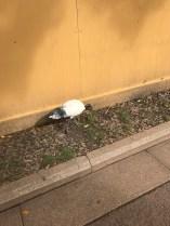 Random Australian bird