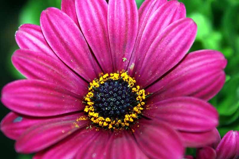 29. April: Lila Kapkörchen - frisch gepflanzt im Blumenkasten