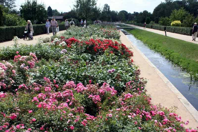 Der Rosenboulevard - ein beliebtes Ziel der Gartenschaubesucher.