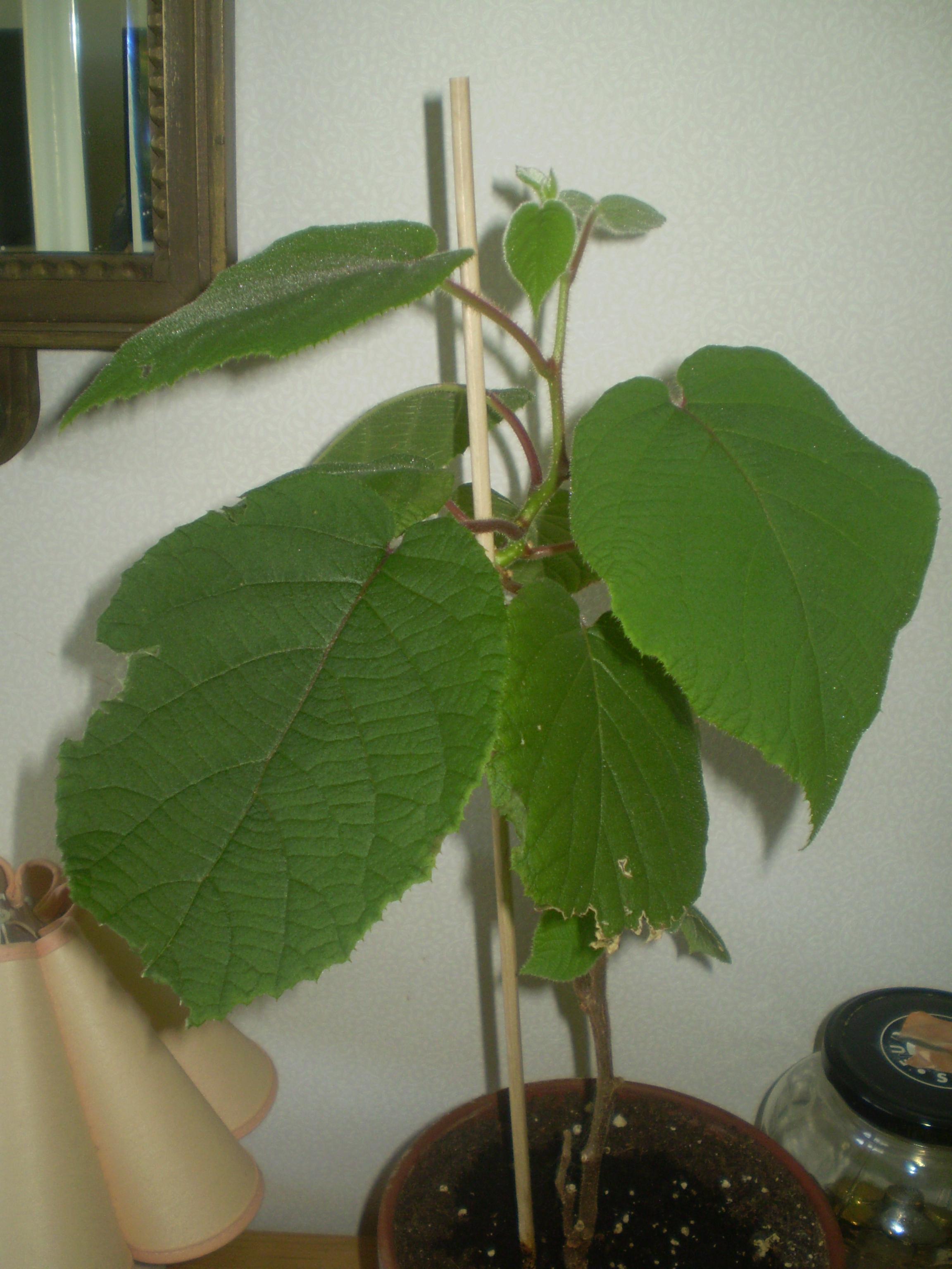Växter 004