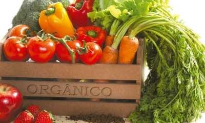 alimentos orgánicos 2