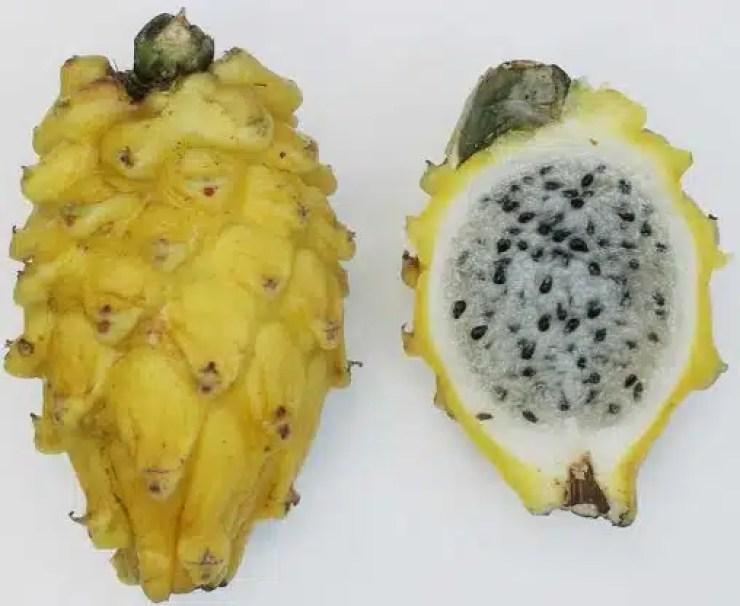 -Yellow_pitaya