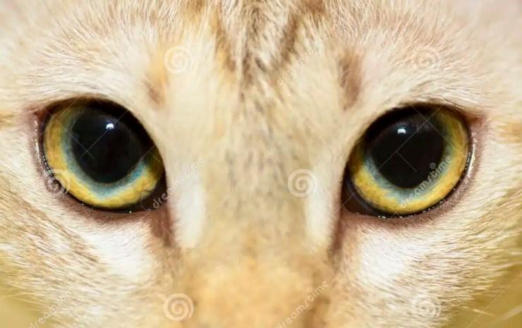 ojos de gato e1569693793548