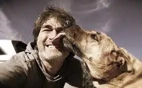 lamida de perro