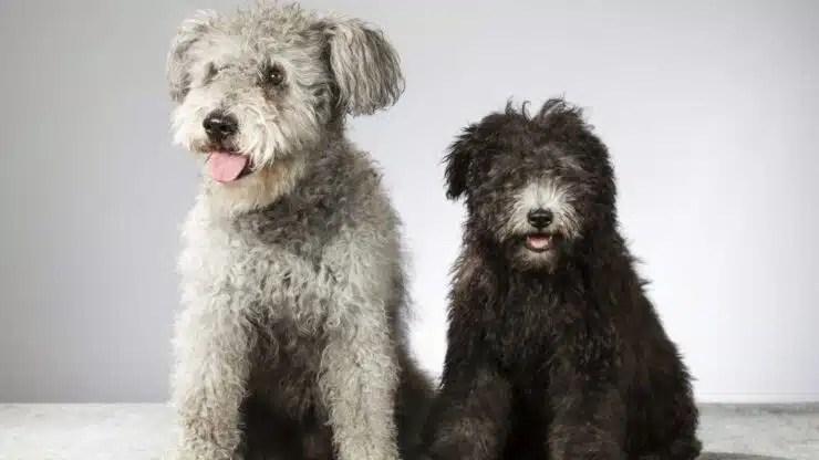 razas de perros más raras del mundo