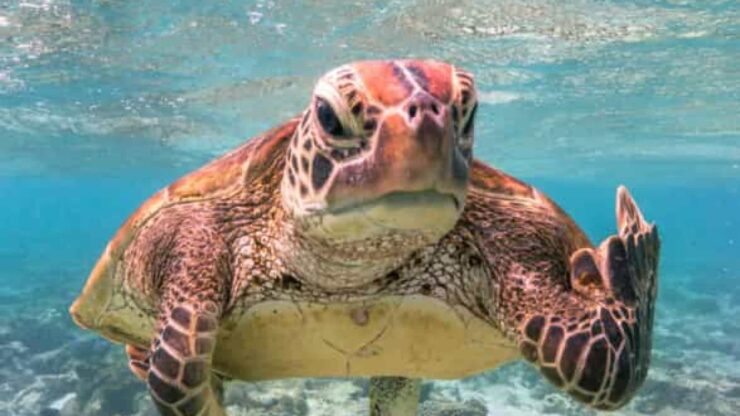 tortuga Terry