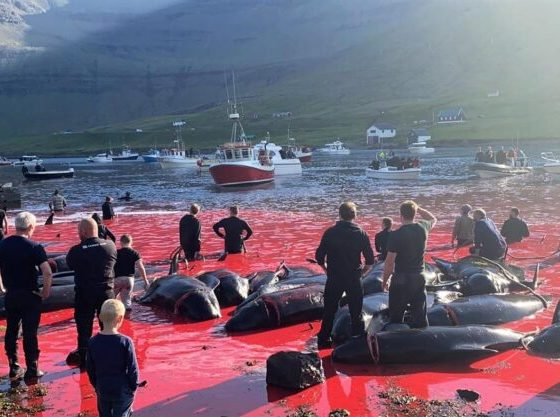 masacre ballenas
