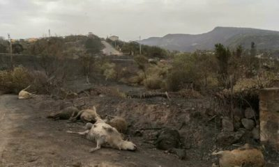 Incendios en Italia: más de 20 millones de animales murieron en dos meses