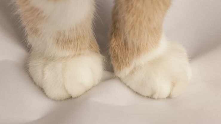 gatos masajean sus patas