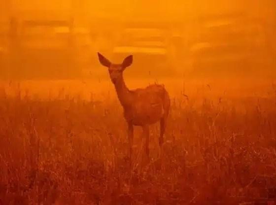 Un gran incendio forestal deja ocho desaparecidos en California
