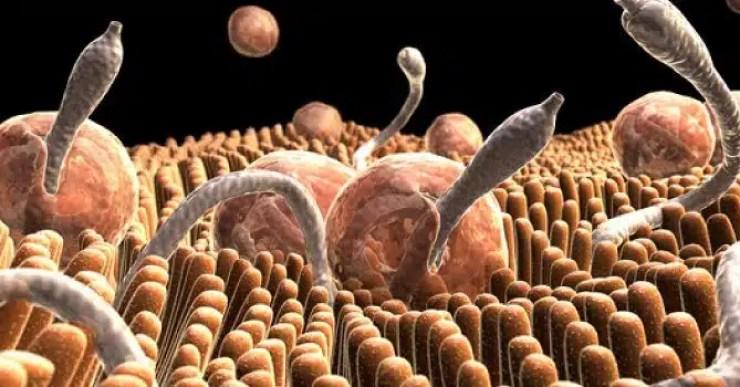 parásitos intestinales