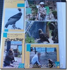 fåglar-gibraltar