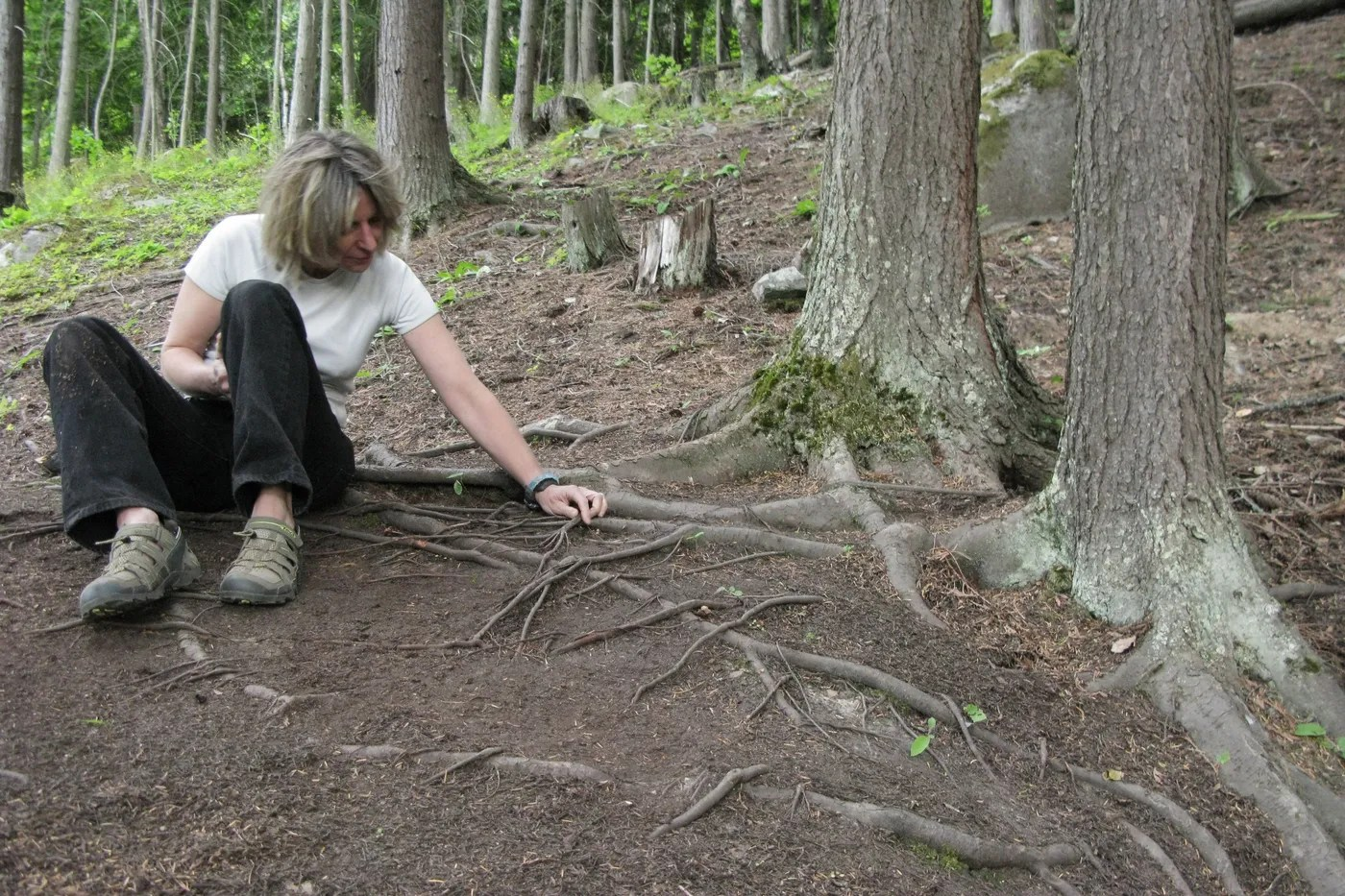 Writing with humility and passion, suzanne simard's unravelling of the secret life of trees is changing the scientific mindset. Suzanne Simard Changed How The World Sees Trees