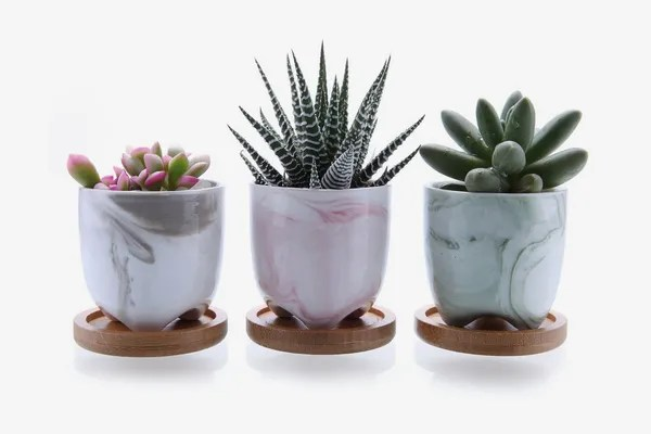 26 Best Pots And Planters On Amazon 2019 The Strategist New York Magazine