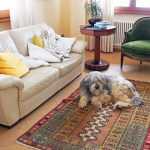The 13 Best Washable Rugs 2020 The Strategist New York Magazine
