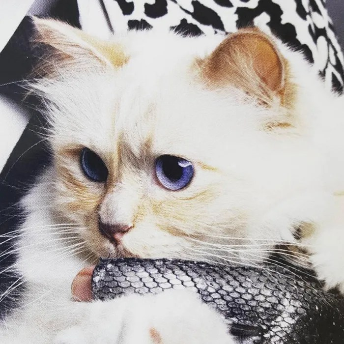 Choupette Lagerfeld. a Cat. Now Has Better Hair Than You