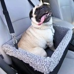 10 Best Car Seats For Dogs 2020 The Strategist New York Magazine