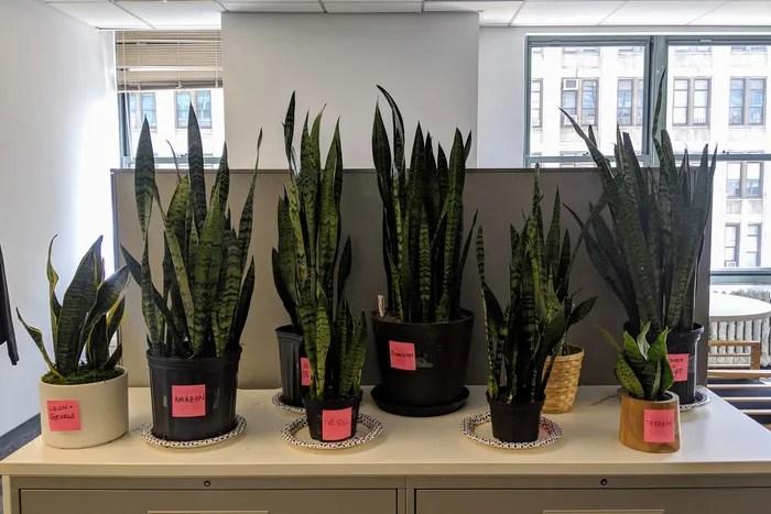 Where To Buy Plants Online 2019 The Strategist New York Magazine