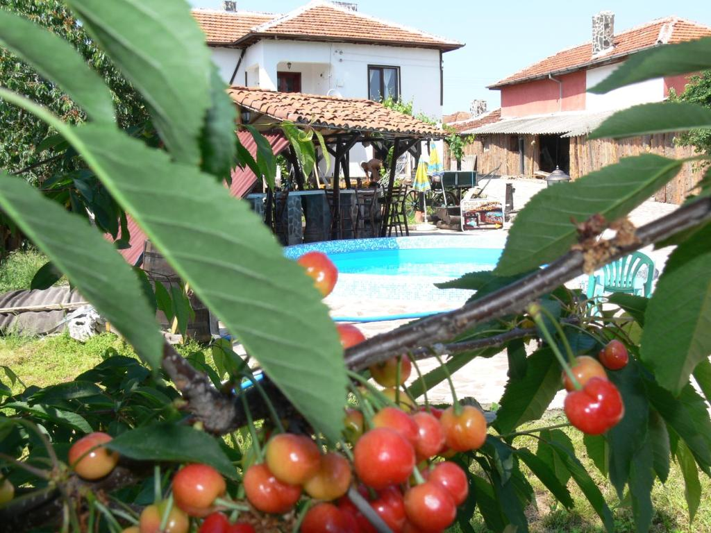 Guest House Bai Petko  Săedinenie  Book Your Hotel With