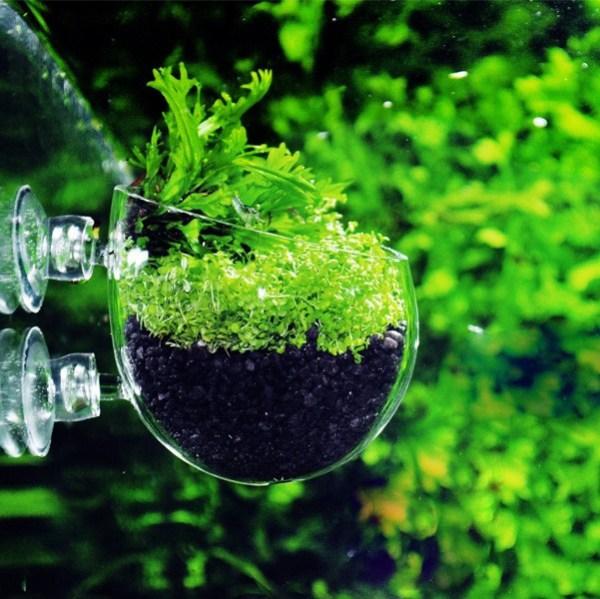 Q-Grow Pflanzschale 1