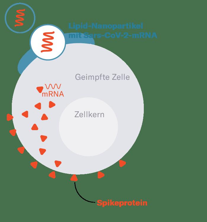 coronavirus impfung mit zwei vakzinen